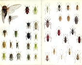 Land Bugs, Water Bug, Cicadas, Plant Hoppers, 1973 Vintage Insect Print 9/12 For Framing, Scientific Print, Library Decor, Entomology Print