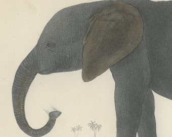 Elephant, 1868 Goldsmith, Hand Coloured, Copper Engraving, Rare Image, Antique Print, Frameable Art