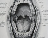 1948 Book Plate.  Atlas of the Mouth. American Dental Association.  The Oral Cavity.