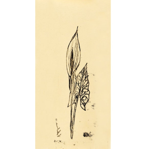 Original Illustration ink Monotype - Gigaro-