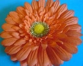 Clearance/Orange Daisy hair flower