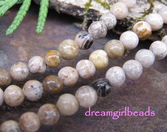 Fossil Coral 4mm Gemstone Round Beads