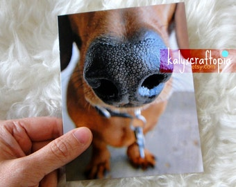 Wet Nose Dachshund Blank All Occasion Greeting Card