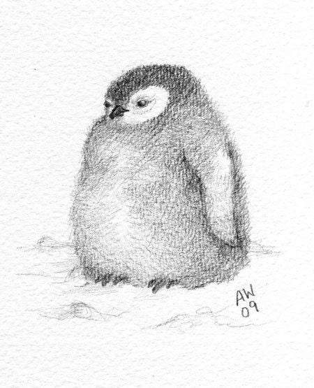 Penguin Chick Original Pencil Sketch