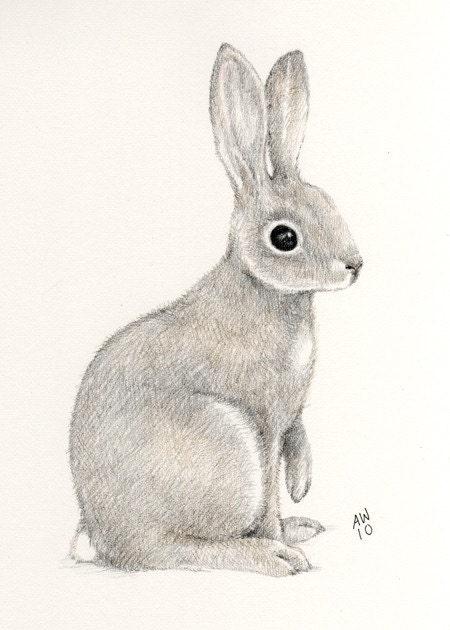 Wild Rabbit Original pencil drawing
