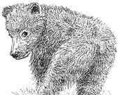 Bear Cub Ink Drawing Embellished MiniPrint