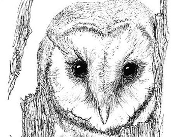 Barn Owl Ink Drawing Embellished MiniPrint