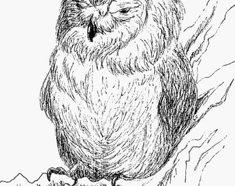 Screech Owl Ink Drawing Embellished MiniPrint