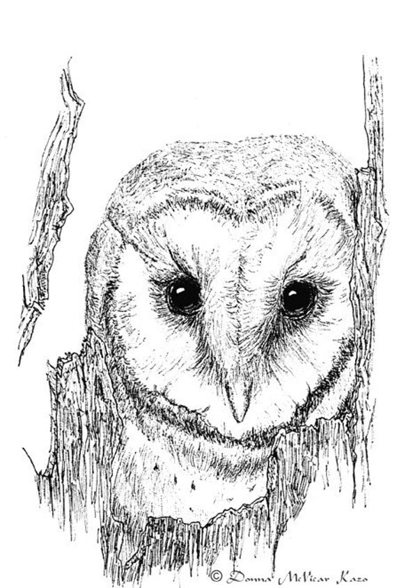 Baby Barn Owl Drawings Barn Owl Ink Drawing Notecards