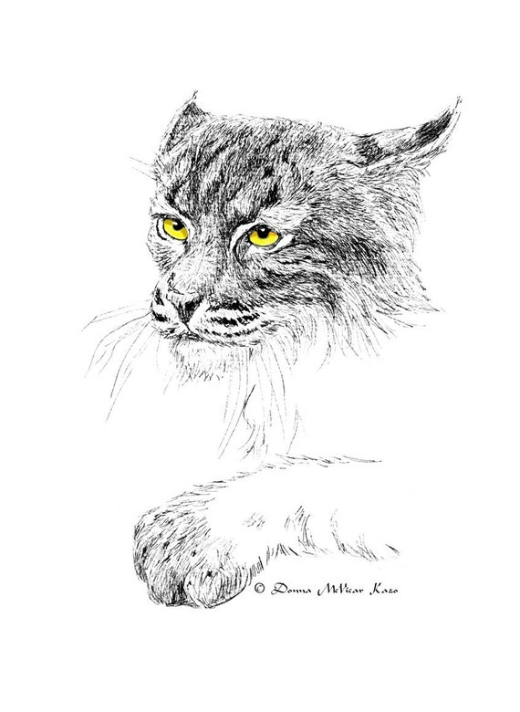 Bobcat Ink Drawing Notecards Set of Two