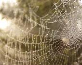 Custom Listing - Spiderwebs, Skies and Dewdrops - Set of five 4 x 6 Matt Photo Prints