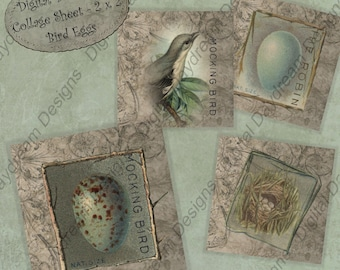 Instant Download Printable Collage Sheet, Birds' Eggs, 2 x 2 size, jpg png or pdf
