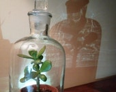 Tiny Bell Jar with ground glass stopper