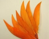 18 Orange Duck Quill Feathers. Pointy Tipped. 001