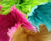 50 Popsicle Mixed Saddle Coque Feathers. HANDPICKED. EXCELLENT QUALITY GUARANTEED.