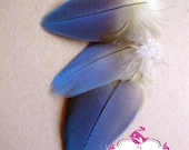 LOT 013 / Exotic Feathers / One of a Kind / Parrot / Macaw / Amazon /