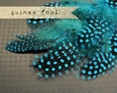 2 Dozen - TURQUOISE Guinea Fowl plumages, millinery and craft, feather couture.