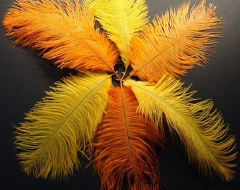 6 Mango and Orange Ostrich Feathers. 7 inches tall.