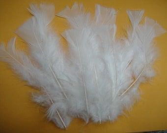12 White Turkey Plumes.