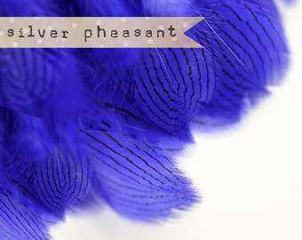 20-30 pcs - Silver Pheasant Feathers Strung - Purple