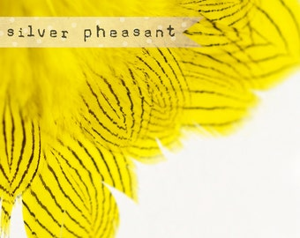 20-30 pcs - Silver Pheasant Feathers Strung - Chartreuse Yellow
