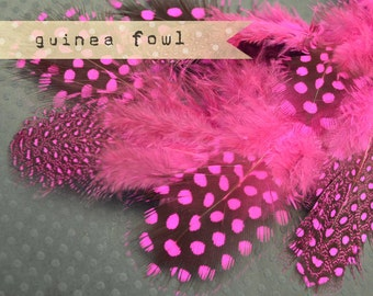 2 Dozen - HOT PINK Guinea Fowl plumages, millinery and craft, feather couture.