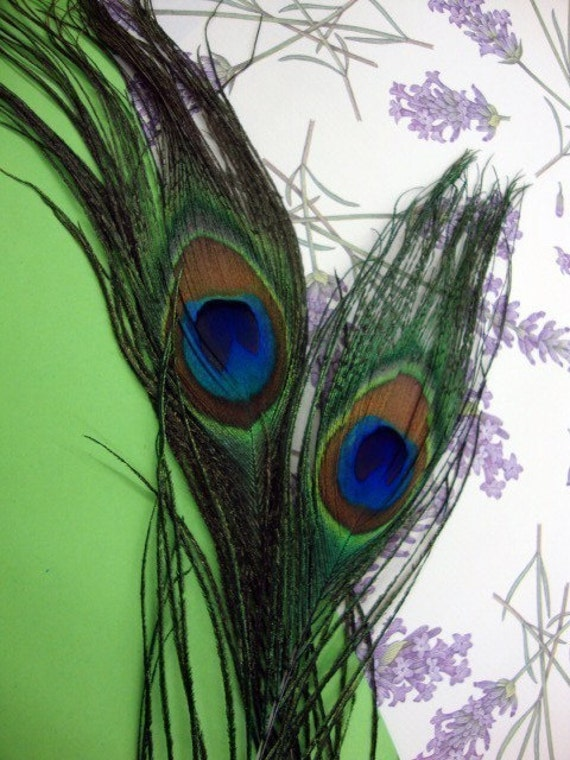 12 PEACOCK - Small Size - Individual peacock feathers