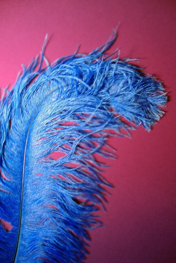 XL Royal Blue Ostrich Plumes. 13-16 inches tall. EXCLUSIVE QUALITY.