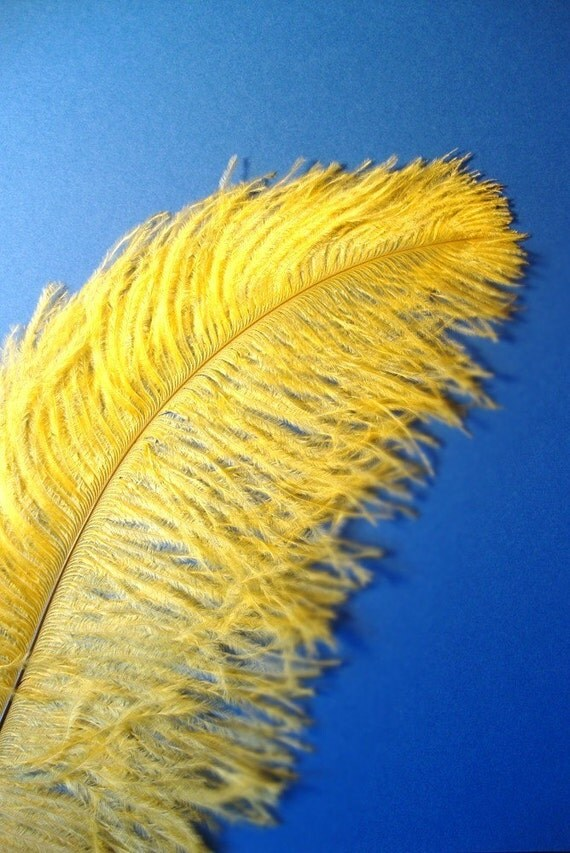 XL Yellow Ostrich Plumes. 13-16 inches tall. EXCLUSIVE QUALITY.