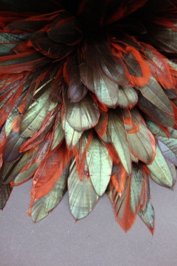 20 Naturally dyed Red with Iridescent Color coque tail feathers.