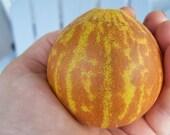 25 Pocket Melon Seeds