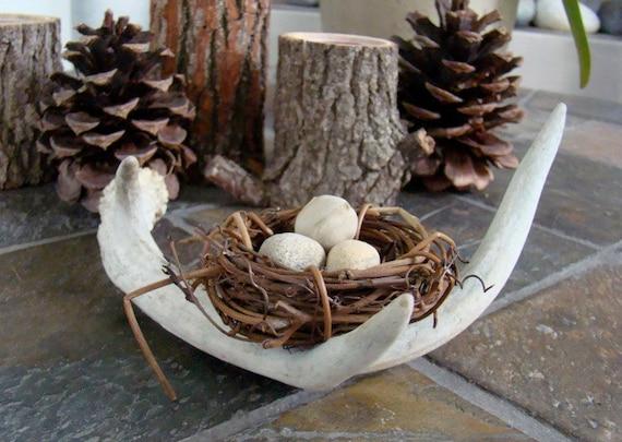 Bird nest deer antler arrangement home decor for The nest home decor