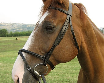 Horse bridle with raised browband and flash noseband