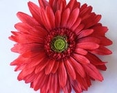 7 Inch Gerber Daisy-----GIANT--------RED HOT