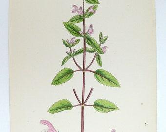 1867 Antique Botanical Print, Pink Hemp Nettle Flower, Original Sowerby Botanical, Vintage Flower Art Gift for Her, Antique Garden Decor