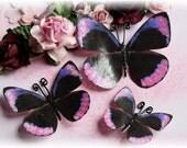 Passion Fruit Butterflies for Scrapbooking, Cardmakind, Mini Album, Tag Art