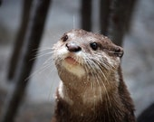 otter says PLEASE 5x7 photo print