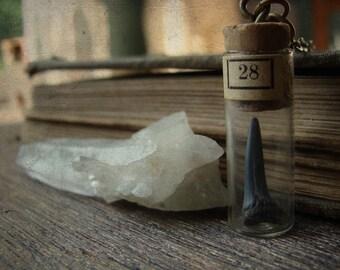 Portable Curio No. 002 - The Thousandth Shark's Tooth