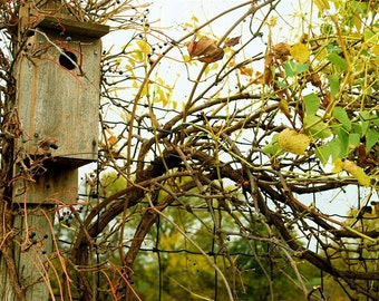 Old Fashioned Country Rustic Birdhouse Amidst Midwestern Autumn Harvest of Berry Vines on a Wood Fence