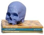 Homo sapiens chalkboard skull-FREE US SHIPPING