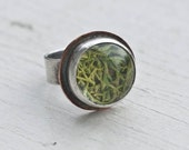 Sterling Moss Terrarium Ring