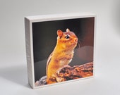 SALE SHOP CLOSING, Nature Photograph on Wood Photo Block with Cute Chipmunk 3x3  on a White Block Woodworking