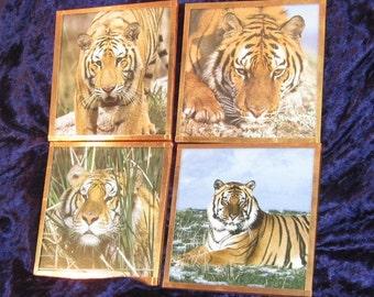 Tiger Copper Coasters - Set of 4