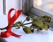 Real Holiday Mistletoe