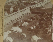 Vintage Stereoscope View - Union Stock Yards, Chicago