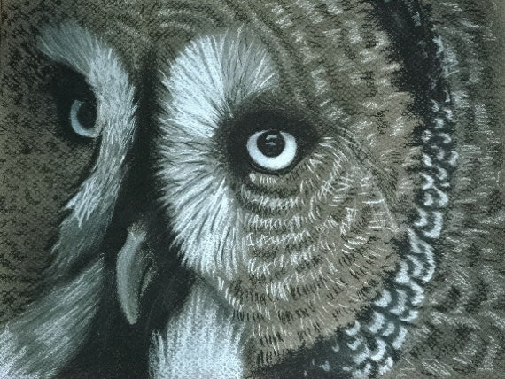 Wise Owl 4x6 Print from Original Drawing