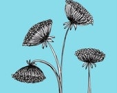 Quick Draw - Sky Blue Queen Anne's Lace Flower Art Print - 5x5