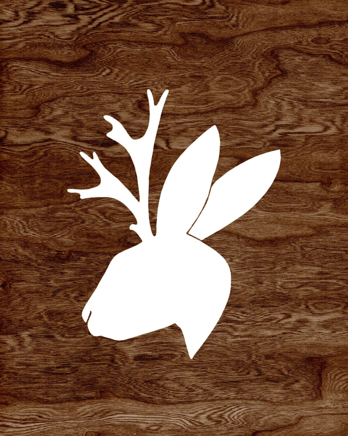 Jackalopes Are Real!