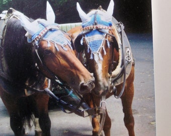 Print - Kissing Cousins - Prague Carriage Horses  - Special Price