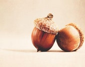 "Acorn Photograph- Fall Decor- Autumn Decor- Wall Art-     ""Acre"" nougat and mocha photo of two acorns - TraceyCapone"